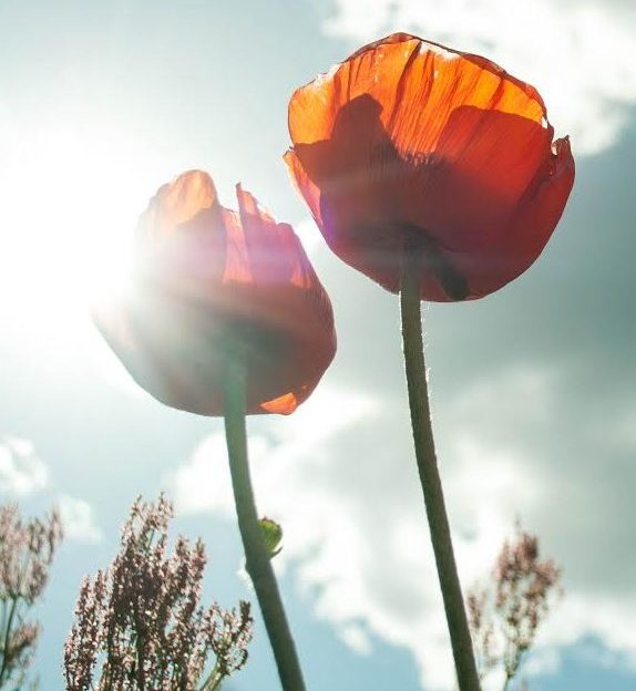 fleurs du bonheur