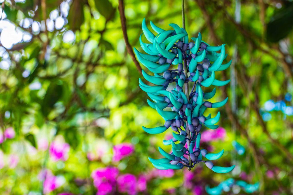 la phytothéraphie en naturopathie
