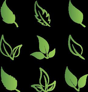 feuilles vertes et blanches